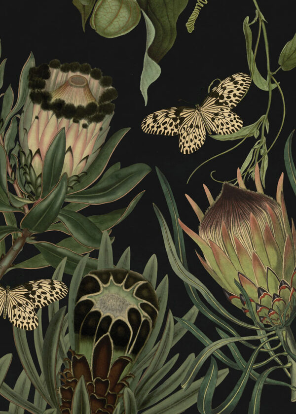 African.Exotic_Protea-Black