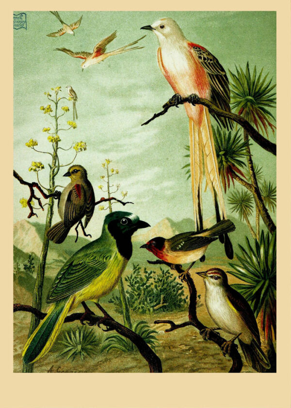Wonderland_Birds_TurkLand